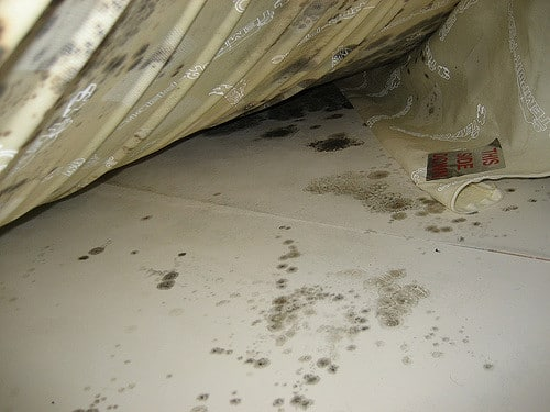 Mold under the bed